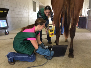 Equine Diagnostic Radiography Services